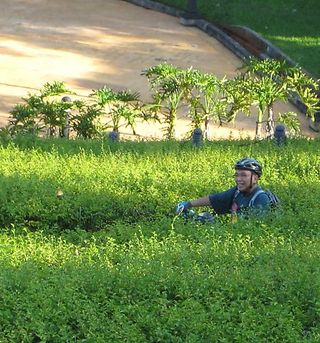 Zigzag garden