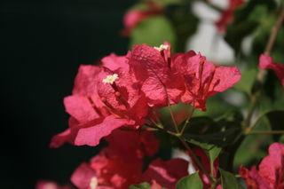 Garden25feb2009 019