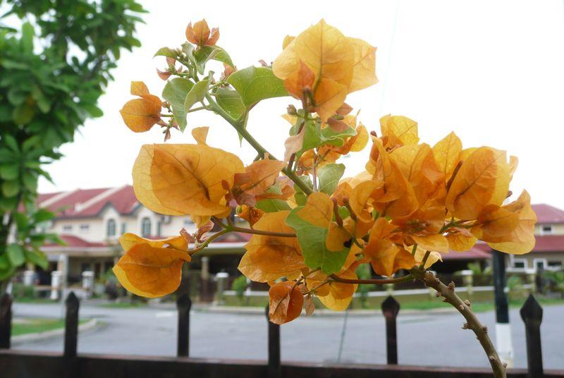 Flowers@BBB 003