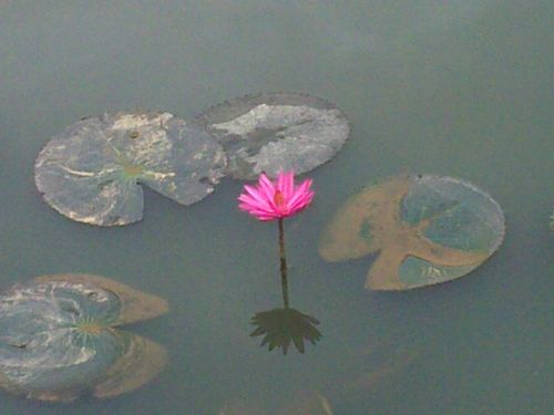 Flower in dirty water