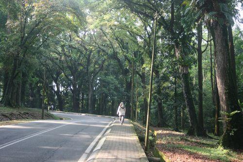 Walk FRIM