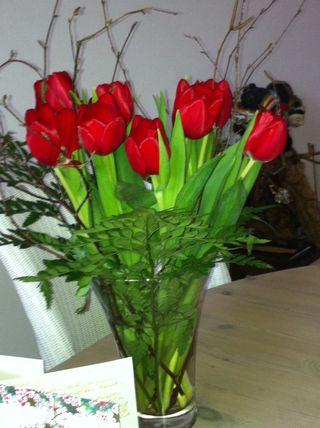 Winter tulip from Guus