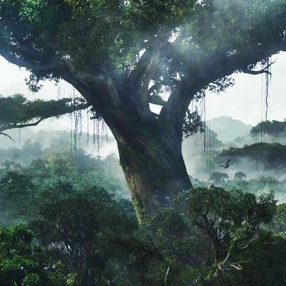 Mystical Jungle in Kelantan
