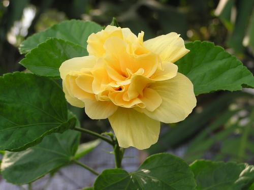 Guesstheflower